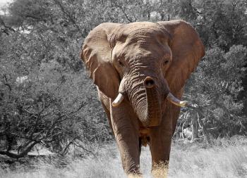 elephant-84186_640